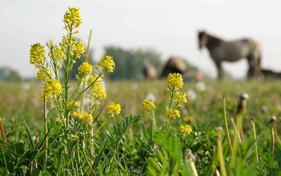 Grazing Management in practice