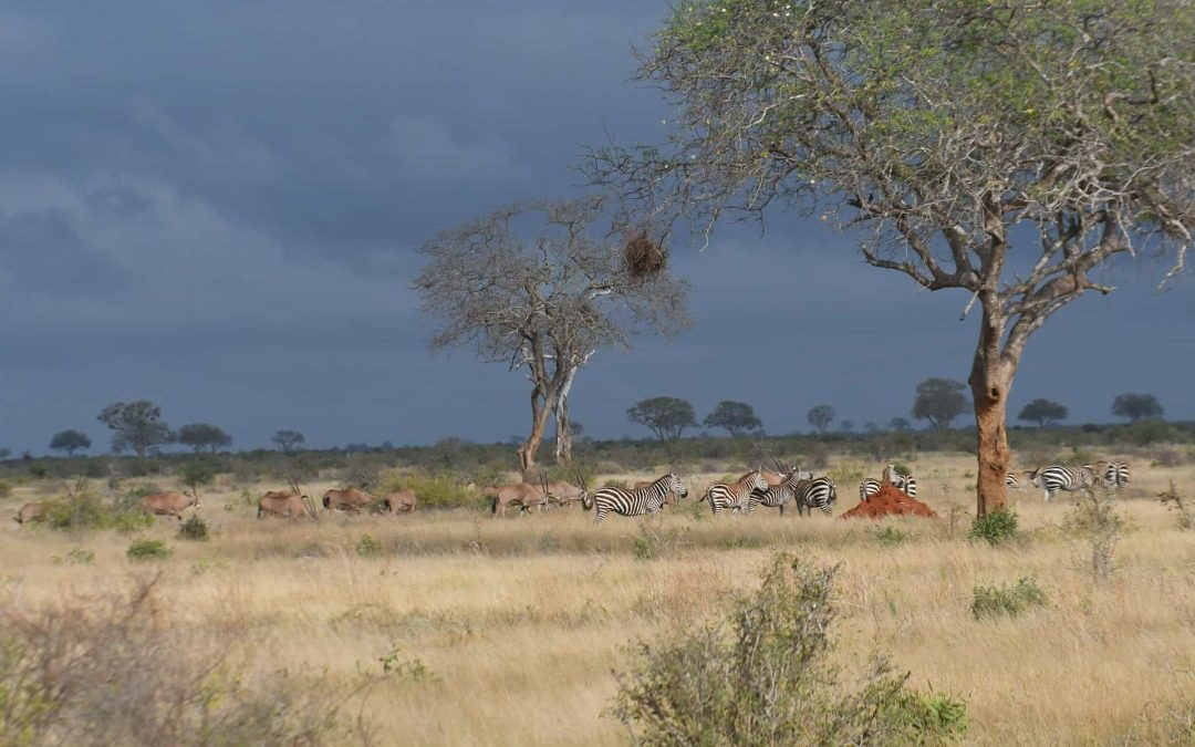 Species Conservation in Protected Areas