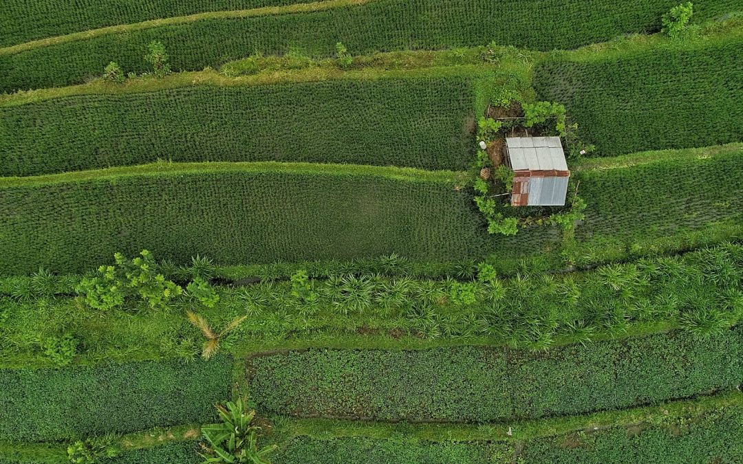 Sustainable Food Security: The value of systems thinking