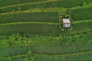 sustainable food, systems thinking
