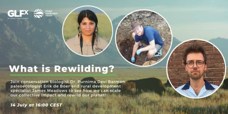 what is rewilding?
