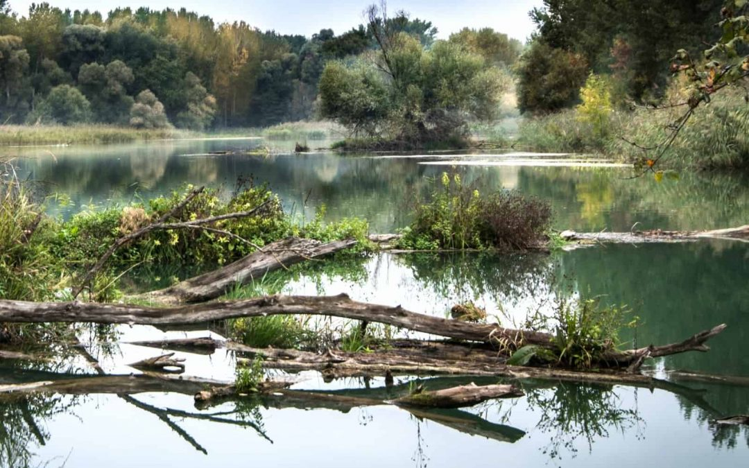 Danube Floodplain Online Course